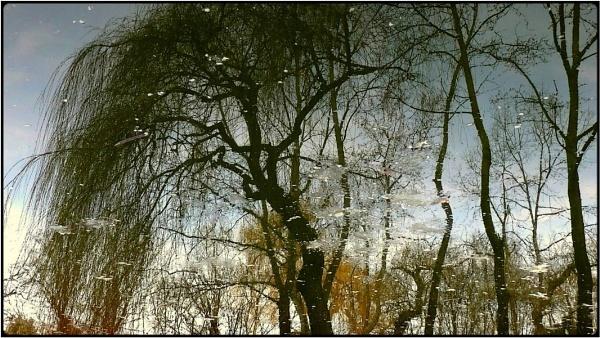 spring pond by FabioKeiner