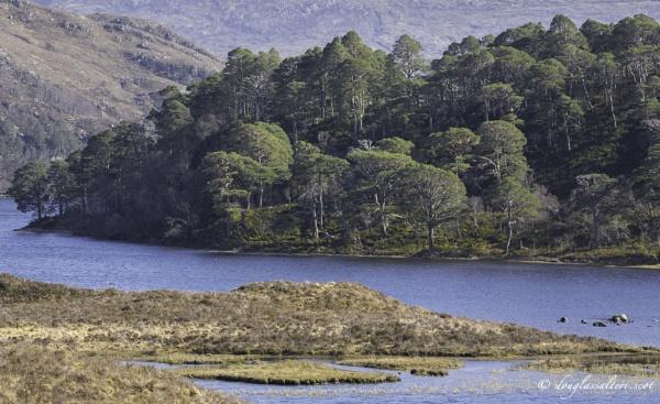 Torridon Forrest... by Scottishlandscapes