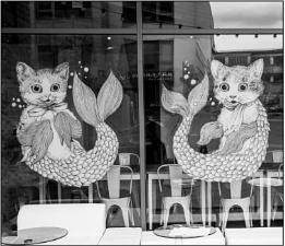 we are siamese catfish