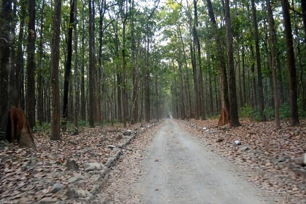 Jim Corbett Park Ramnagar [India] 2 by Bantu