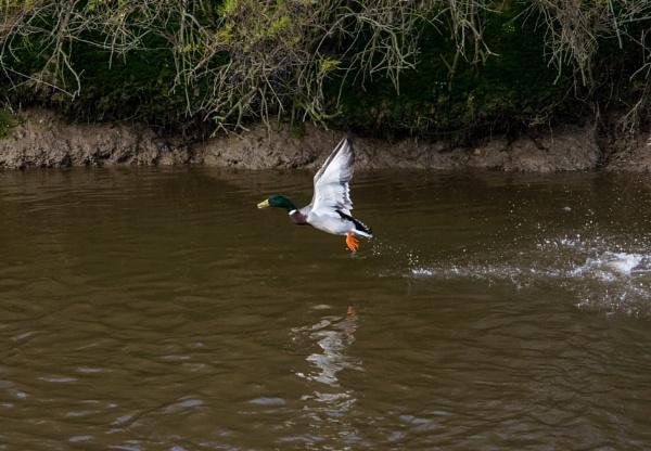 Taking flight by Madoldie