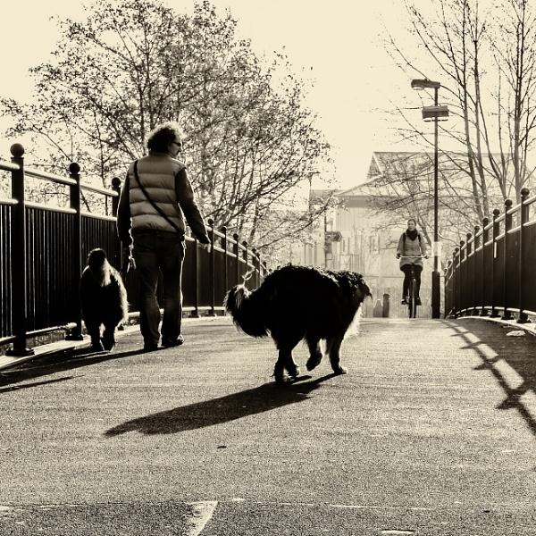 bridge by mogobiker