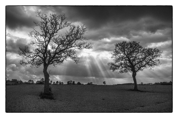 Two Trees by Drummerdelight