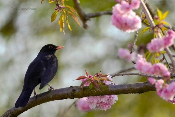 Spring in the Garden by DavidCookson