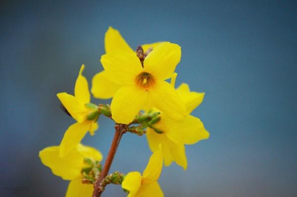 spring by alirezahasanloo
