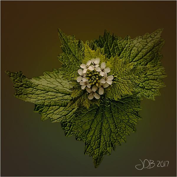 White & Green by Big_Beavis