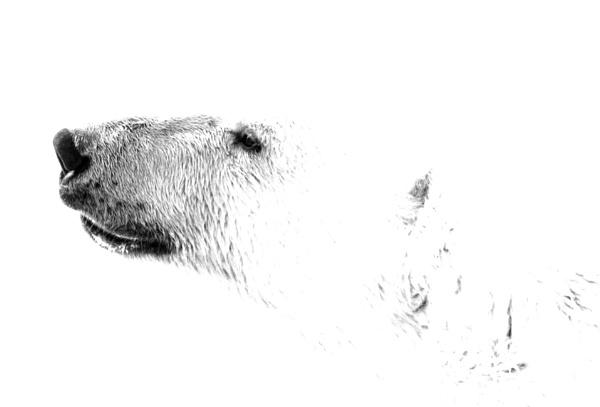 Polar Bear 4 by katep1
