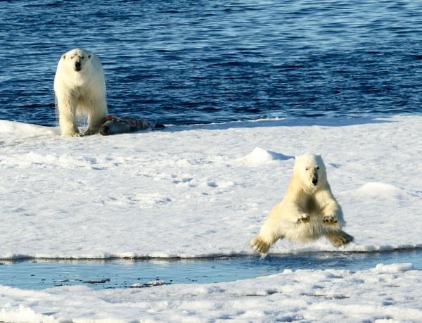 Polar Bears by katep1