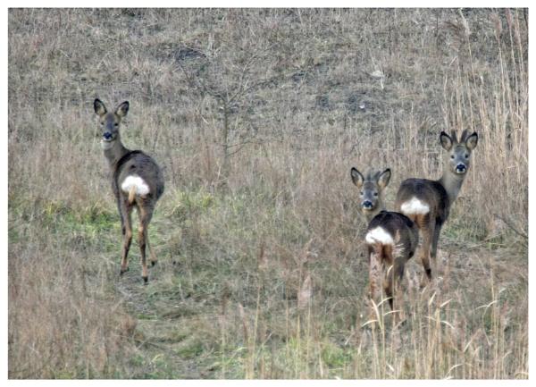 Deer me by davidgibson