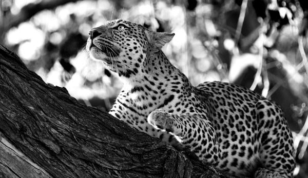 Africa by sjk123