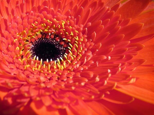 A Thank You Flower by KarenFB