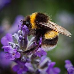 Photo : Busy Bee