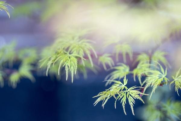 Spring Garden by LesleyJ