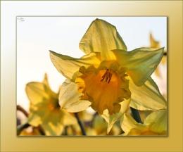 Windhill Spring