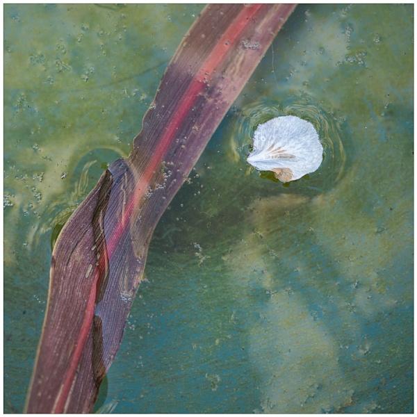 Flotsam by SlowSong