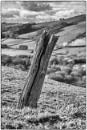"""""""A Neighbourhood Post"""" by Willmer"""