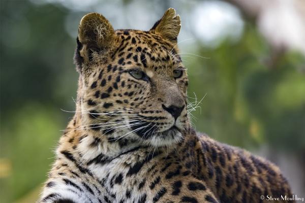 Top Cat by SteveMoulding