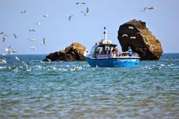 Guzzling gulls