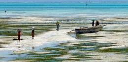 Jambiani at low tide, Zanzibar