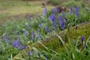 Bluebell Wood by jasonrwl