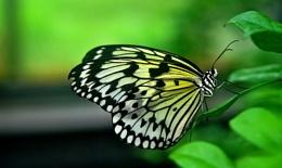 A   delicate  nature