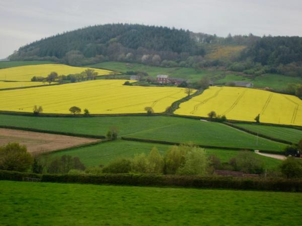 Glorious Devon by dixy