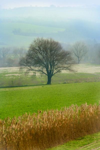 Morning Field by manicam