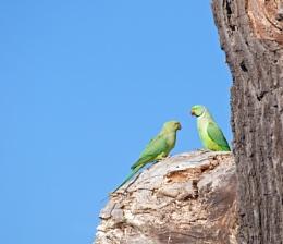 Parakeet chit chat..
