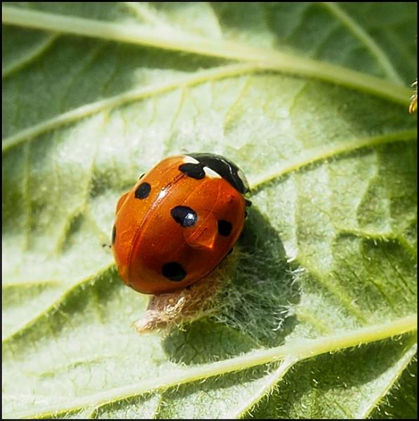 Ladybird by civitas