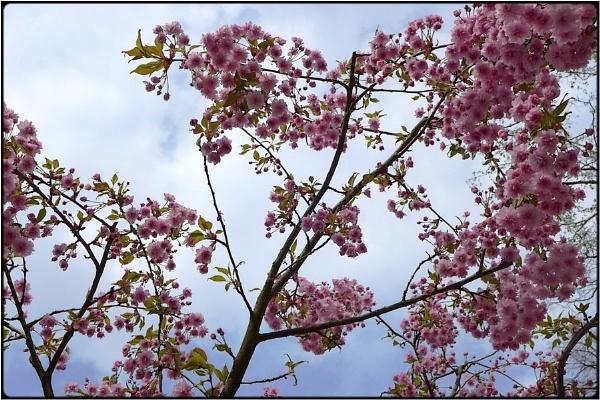 easter sakura by FabioKeiner