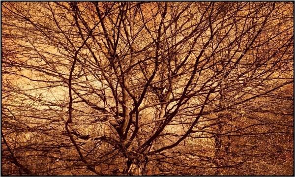 spring tree by FabioKeiner