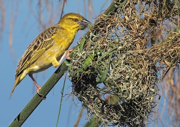 Nest Builder by johnke