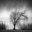 Tree in the mist by Diggeo