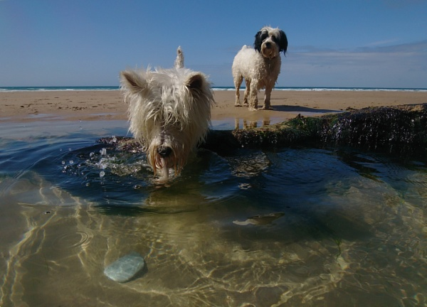 Leo, Ruby and the stone by JulieThomas