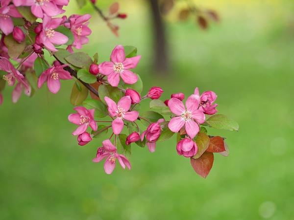 pink by LaoCe