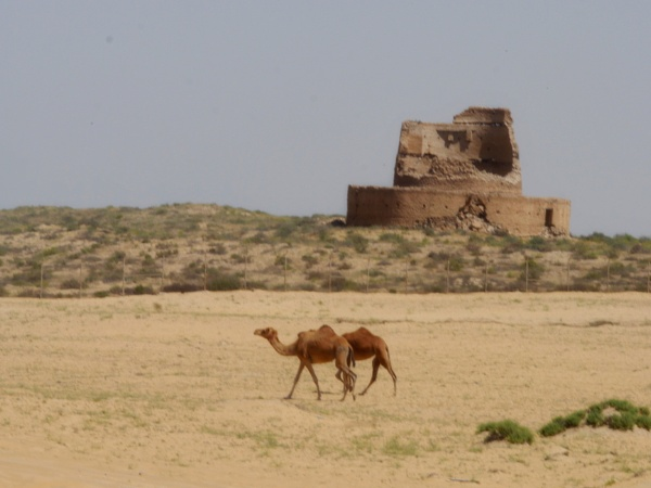Lonely Camels by Savvas511