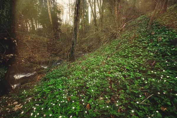 Fairytale Anemone Creek by maxrastello