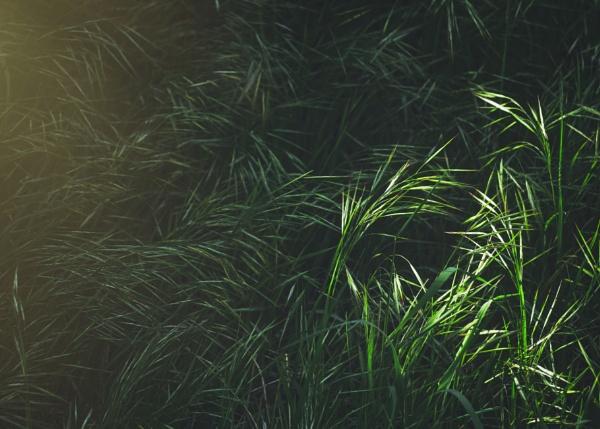 Greenery field by maxrastello
