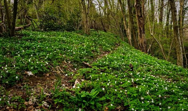Spring Trail by maxrastello