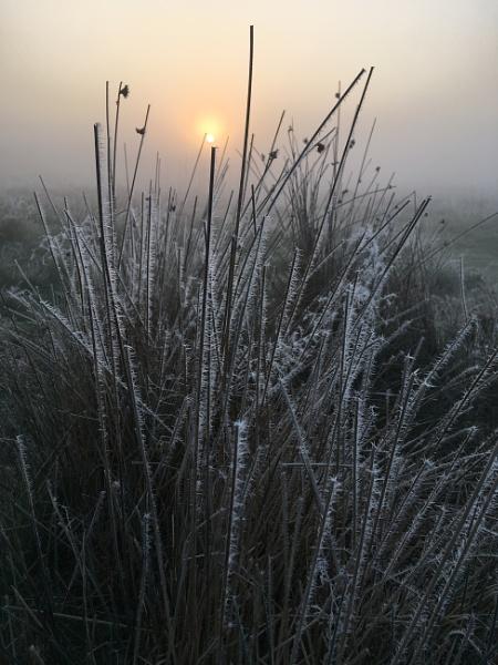 Chilly Morning by ryalux41