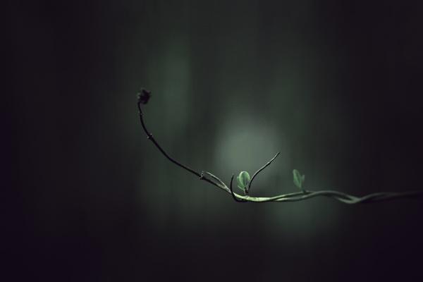 ...dark spring by krisstina