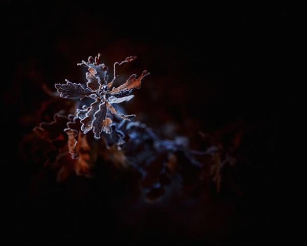 ...oak by KristinaZvinakeviciute