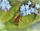 Little buzzer ! by bricurtis