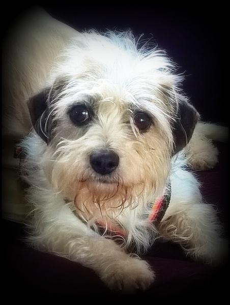 Rescue Dog - ex breeder Flute by sheilarose