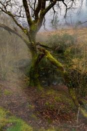 Woodland still