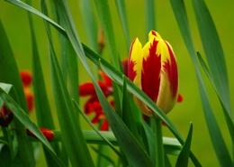 In the Spring Garden.