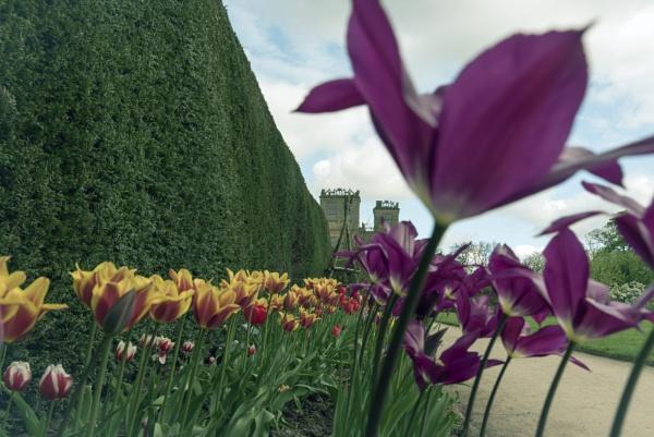 Hardwick Hall Gardens by mmart