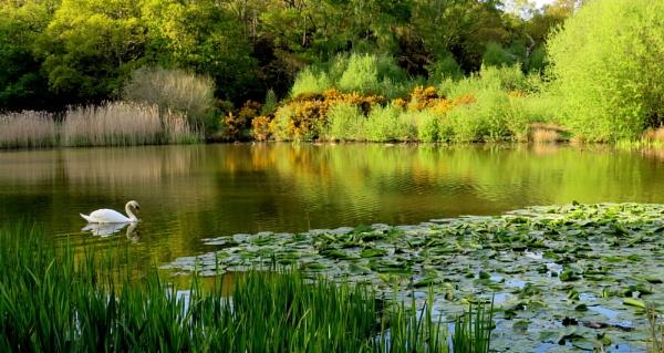 Ornamental Lake by SUE118