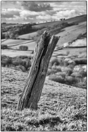 """Old Fencepost"""