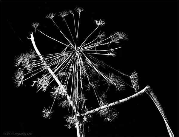 Fireworks by Daisymaye